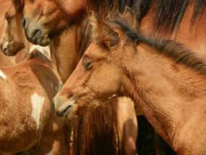 More-Pony-Roundup-2013