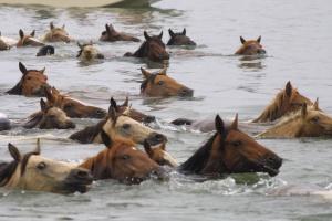 ponies-in-water