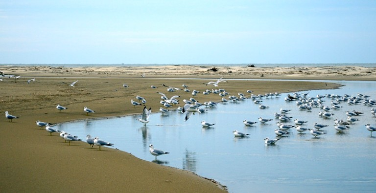 lots of gulls on Fisherman Island-Credit USFWS